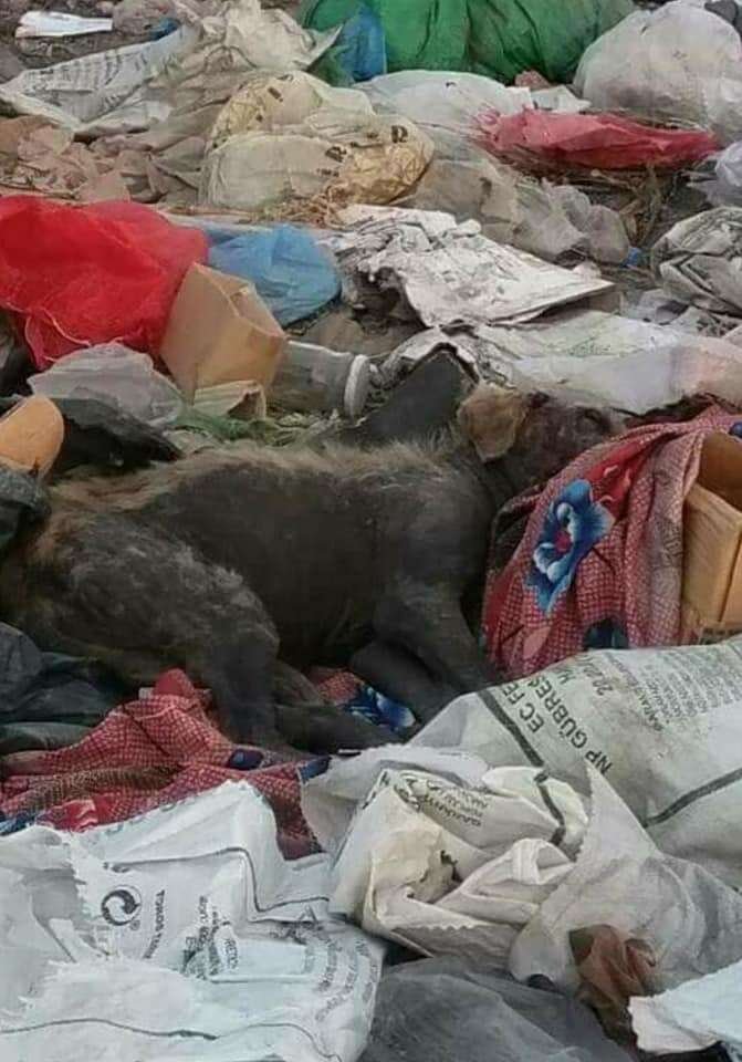 Dog living in garbage dump