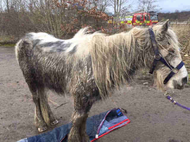 Sick, neglected horse being rescued