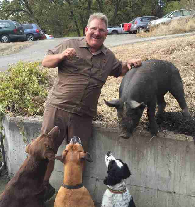 pig dogs oregon UPS driver
