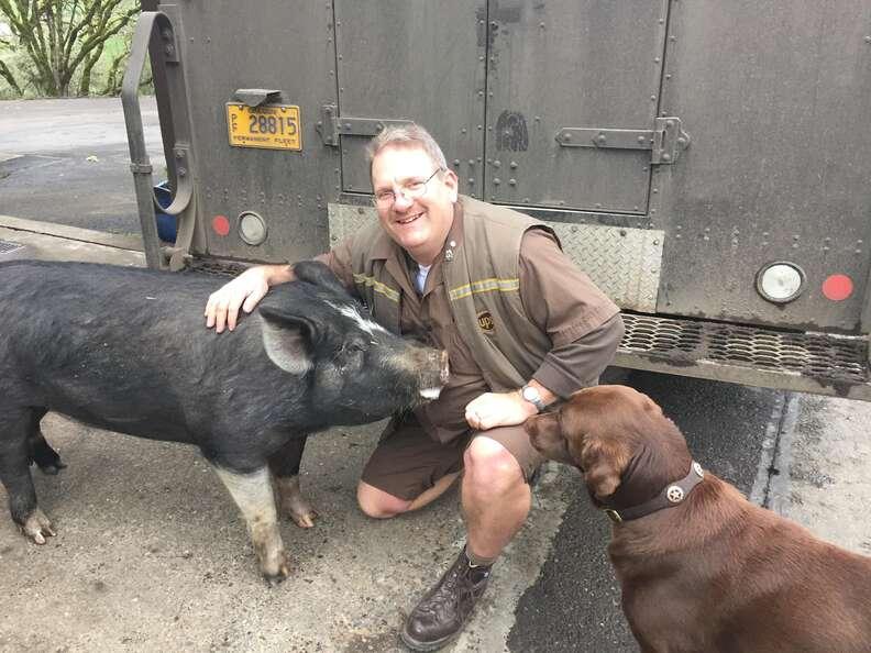 pig dog UPS driver oregon