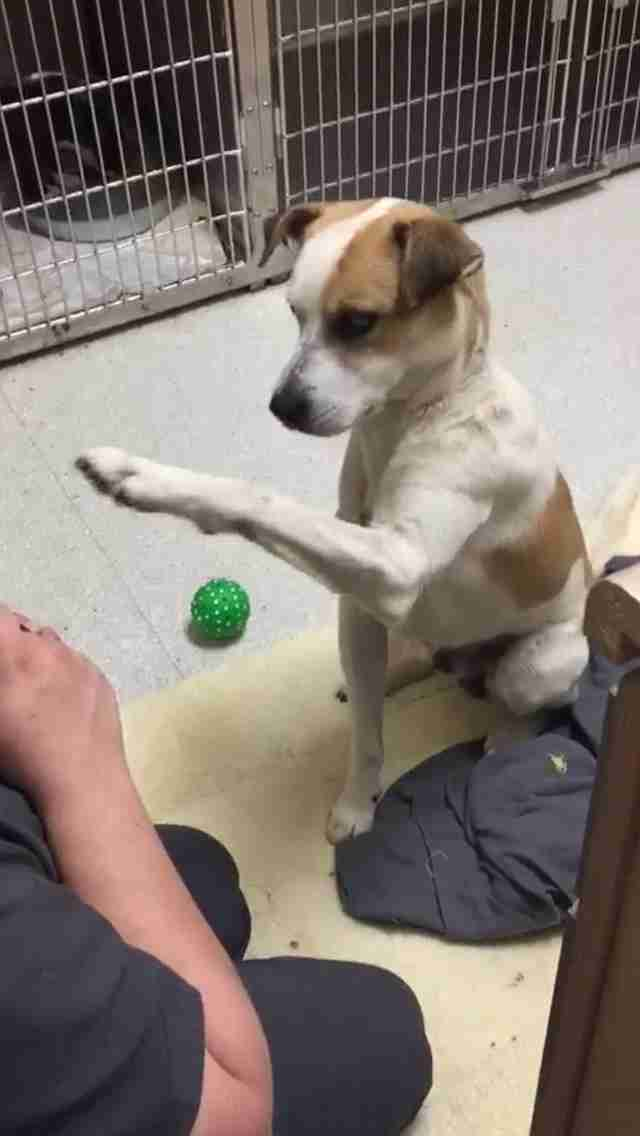 Rescue dog lifting his paw