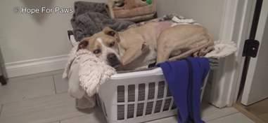 blind dog found in junkyard rescued