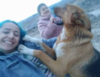 Stray dog leaping up on woman