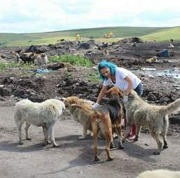 Woman caring stray dogs