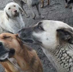 Stray dogs at Turkish landfill