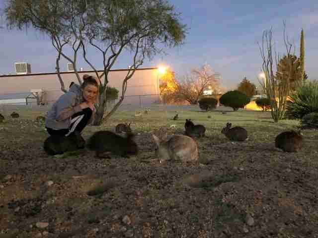 rabbits poisoned las vegas