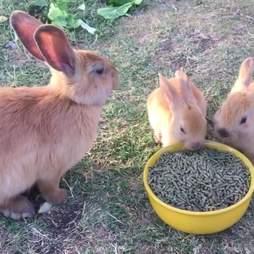 rabbit poisoned rescue las vegas