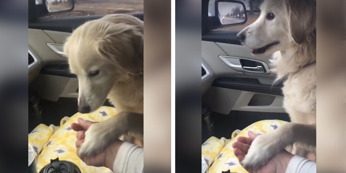 Shelter Dog Insists On Holding Rescuer's Hand During Car Ride Home