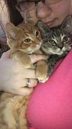 Rescue kitten siblings with person who adopted them in Wisconsin