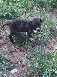 Puppy saved from neglect in Lawrence, Alabama