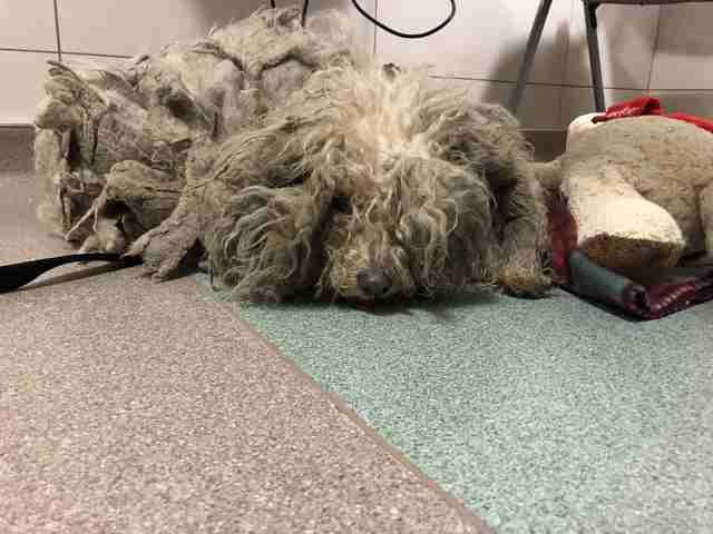 extremely matted dog