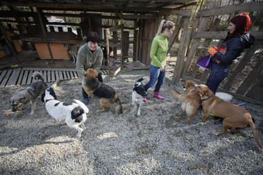 sochi dogs russia rescue