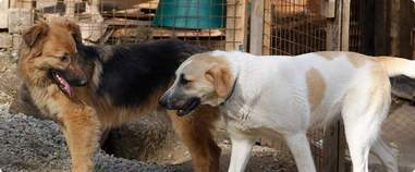 rescue russia stray dogs olympics world cup