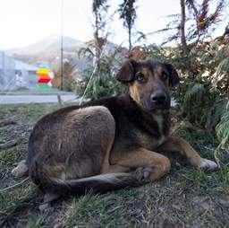 stray dog mother sochi russia