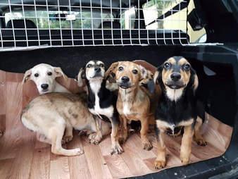 puppies rescue stray sochi russia
