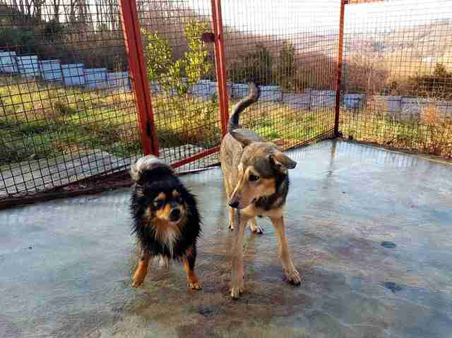 rescue stray dog russia sochi