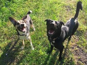 rescue sochi dogs olympics russia