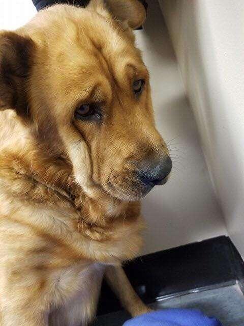 Rio the saddest dog in Detroit