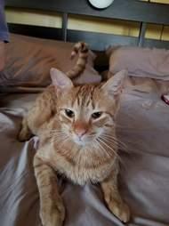 cat head stuck drain pennsylvania