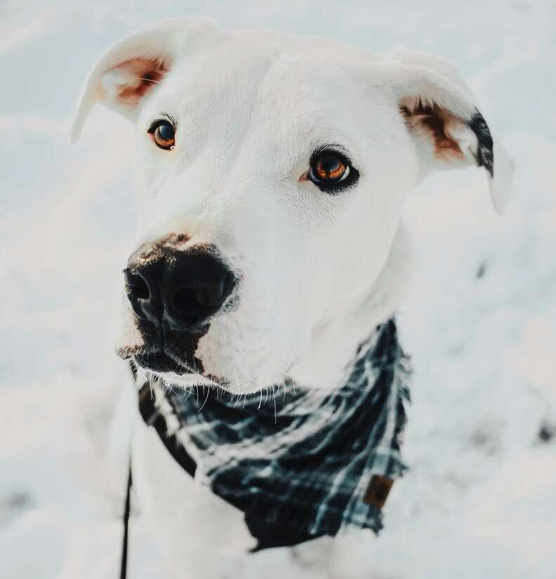dog terrified of strangers