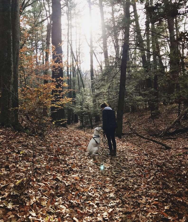 dog scared of strangers