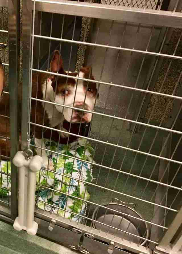 Dog in shelter kennel