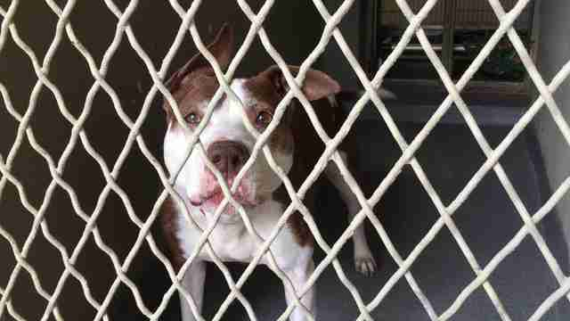 Sad looking dog in kennel at shelter