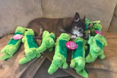 Jaxon and all his toys