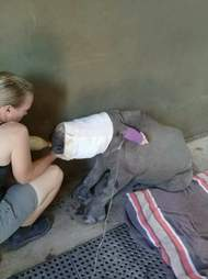 rhino orphan poacher south africa