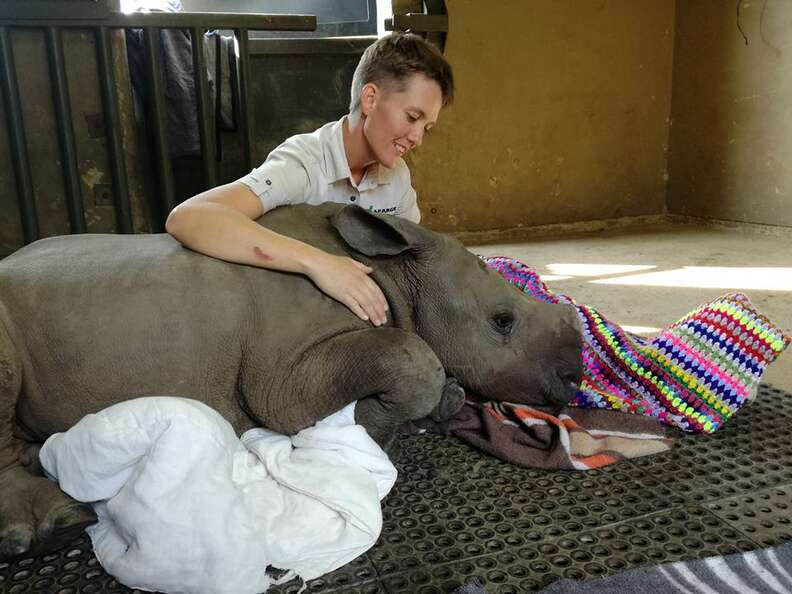 rhino orphan mother killed poacher south africa