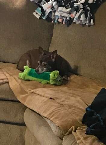Jaxon with his dog toy Greenie