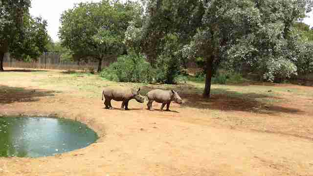 rescued rhinos poachers south africa