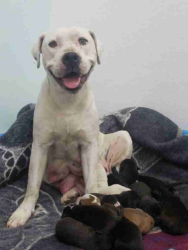 Mother dog and her puppies