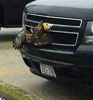 hawk stuck grille truck wisconsin
