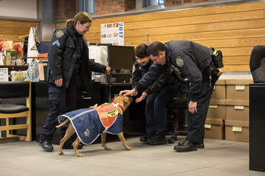 Adoptable pit bull Orson with NYPD officer friends