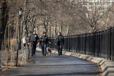 NYPD officers walking adoptable pit bull Orson