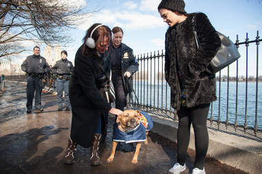 NYPD officers taking adoptable pit bull for walk to meet adopters in Central Park