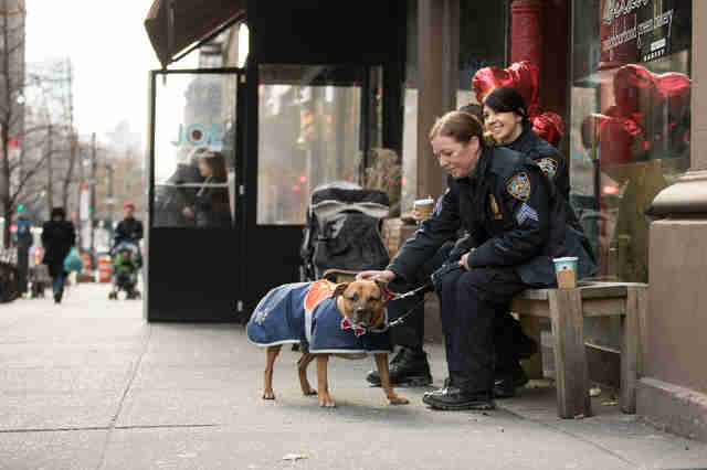 NYPD officers take adoptable pit bull to coffee shop