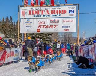iditarod sled dog alaska abuse