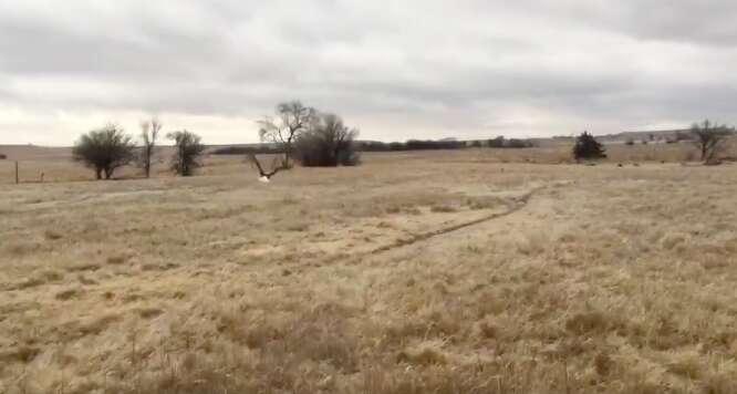bald eagle rescue ice oklahoma