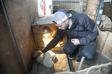 Man petting puppies at dog meat farm
