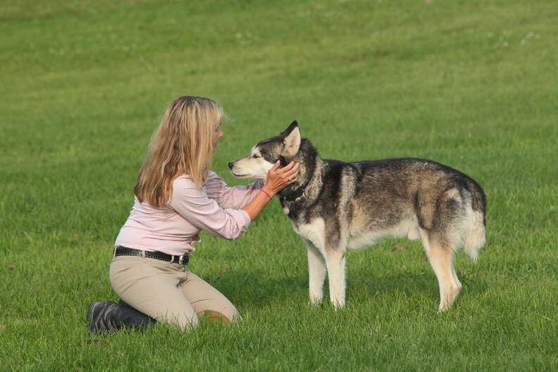 rescued sled dog abuse canada