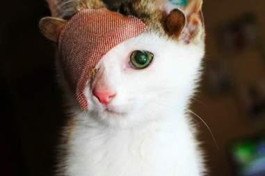 kitten with four ears