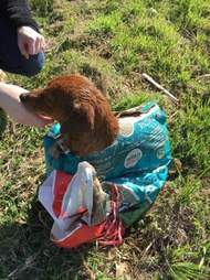 Dog tied up in feed sack