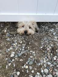dog spies neighbor fence