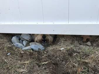 dog spies neighbors fence