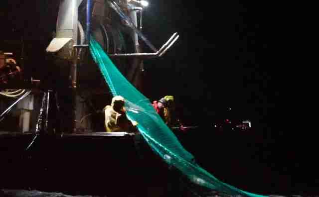 Fishermen pulling in net with dolphin inside of it