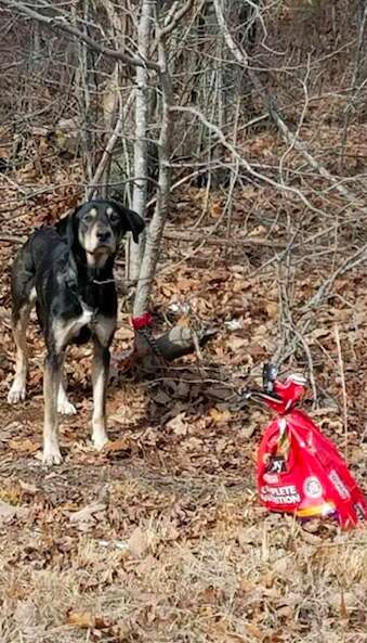 Zeus the dog found in the Virginia woods