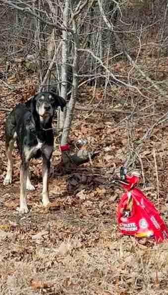 Zeus el perro encontrado en el bosque de Virginia