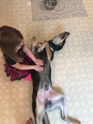Zeus enjoys a belly scratch